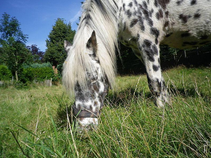 verlass pony kaufen
